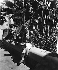 1920 parrot