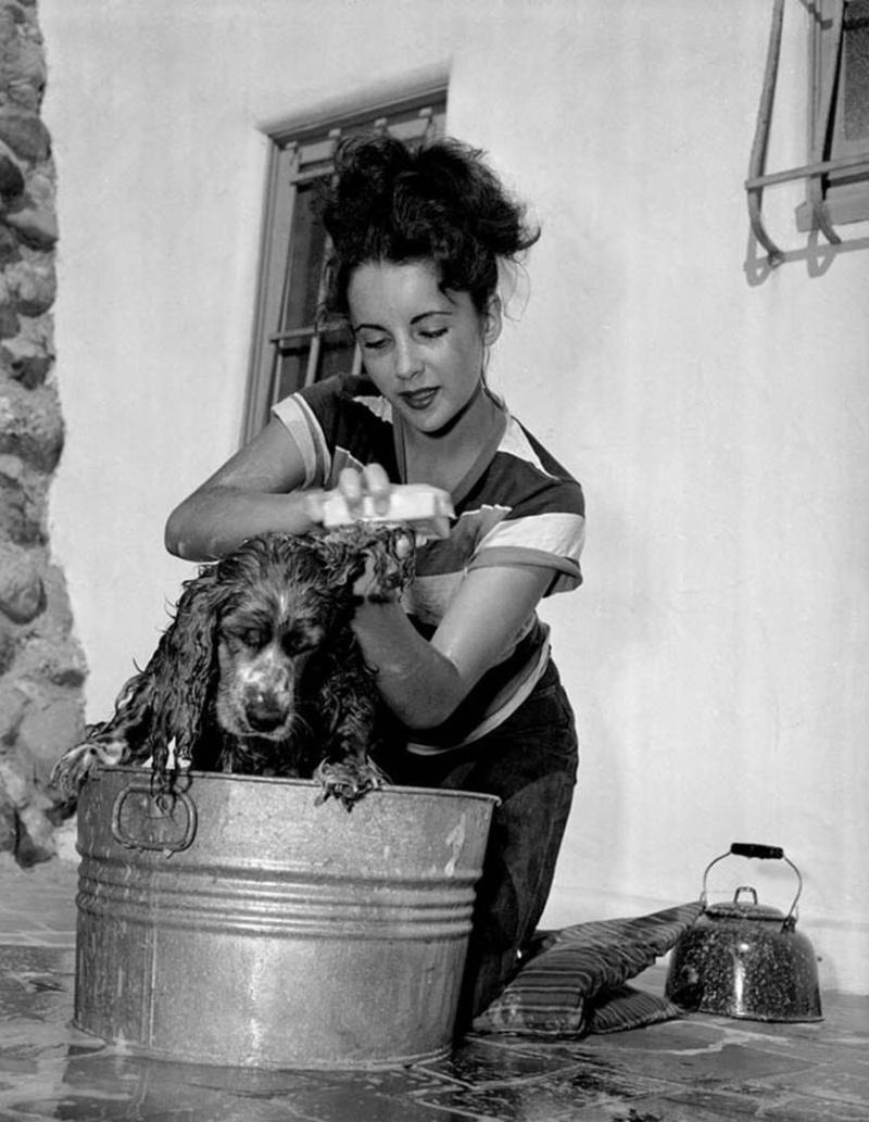 Elizabeth Taylor and Spaniel