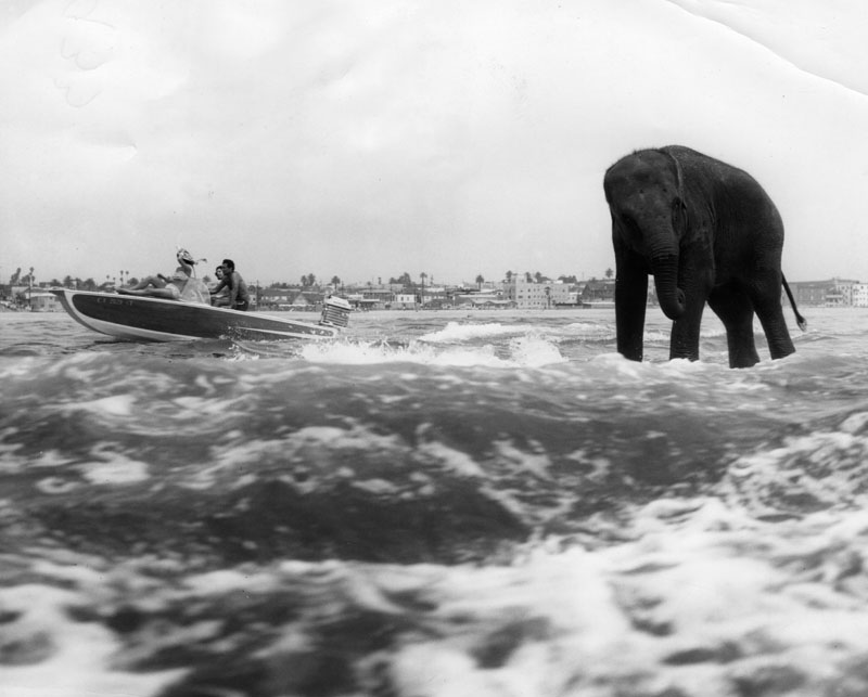 surfing elephant