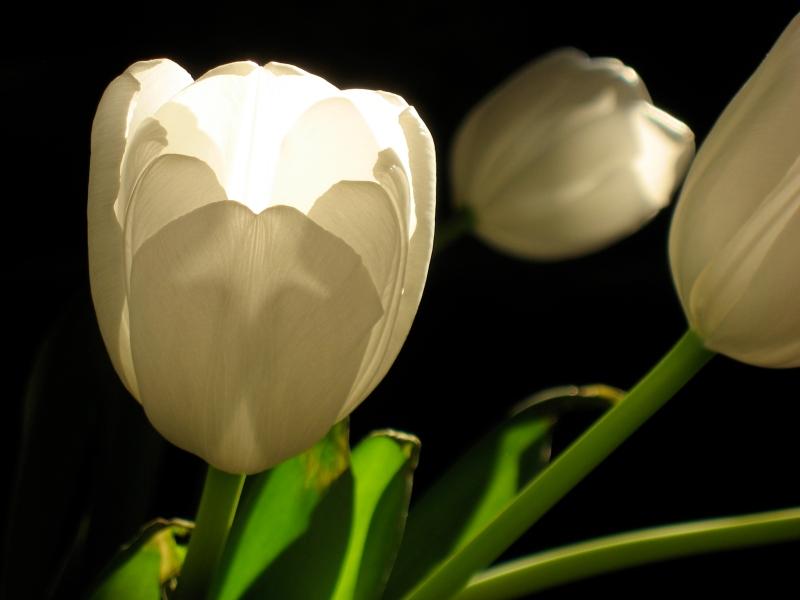 vickie's fleurs 1