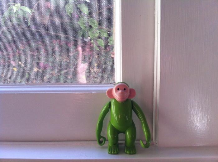monkey on the kitchen sill