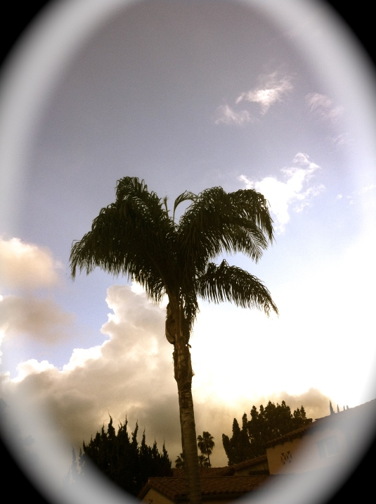 photo(5) 2