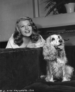 Rita-Hayworth-cocker-spaniel